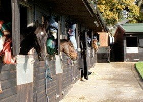 Kauto on course to break his own World Record