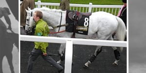 Grand National Grey Horses