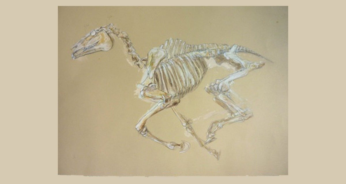 Do you have a horse skeleton in your closet? Artist Julia Midgley would like to draw it