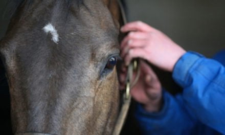 Register now to take part in the next National Equine Health Survey