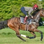 Limato Looks Lively for the Lockinge at Newbury