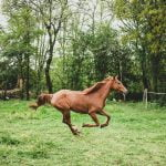 Six Best Practices to Keep Your Horse Healthy