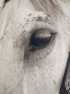 Pexels image white horse